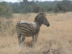 16 daagse rondreis Zuid Afrika: Zulus, Zebras en Swaziland