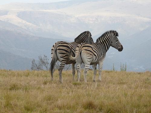 Rondreis Zuidelijk Afrika hotelreis
