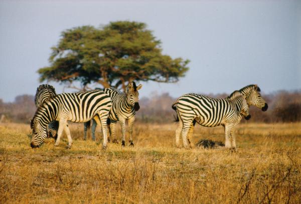 26 daagse rondreis Zuid Afrika, Namibie, Botswana en Zimbabwe