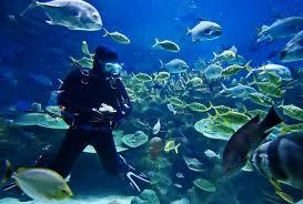 Sportief Zuid: duiken in Zuid Afrika