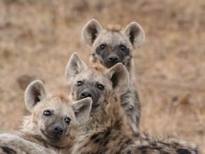 National Parken Zuid Afrika - Karoo NP