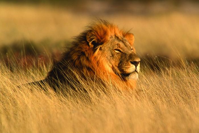 Bouw je eigen rondreis Zuid Afrika