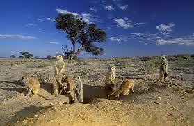 Rondreis zuid afrika Kgaladagadi