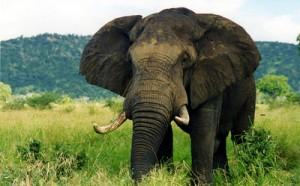 Zuid Afrika Wild Life Photography