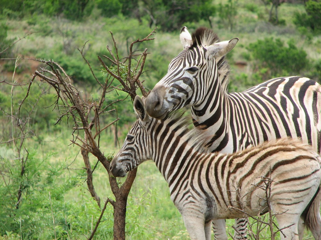 Fly drive Zuid Afrika: Grand Tour South Africa