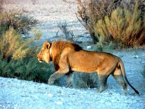 Zuid afrika nationale parken