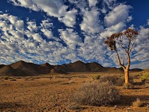 National Parken Zuid Afrika - Mokala NP